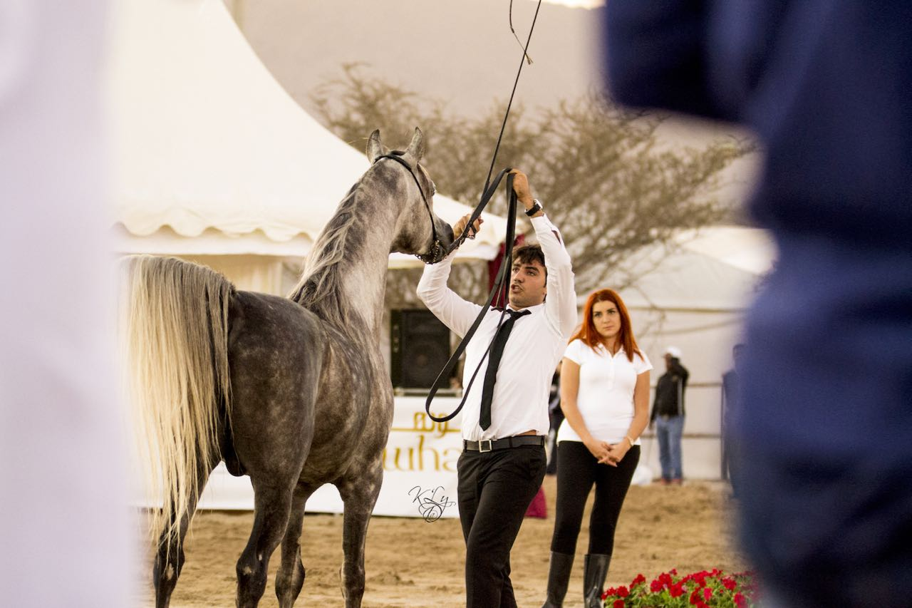 Fujairah National Arabian Horse Show