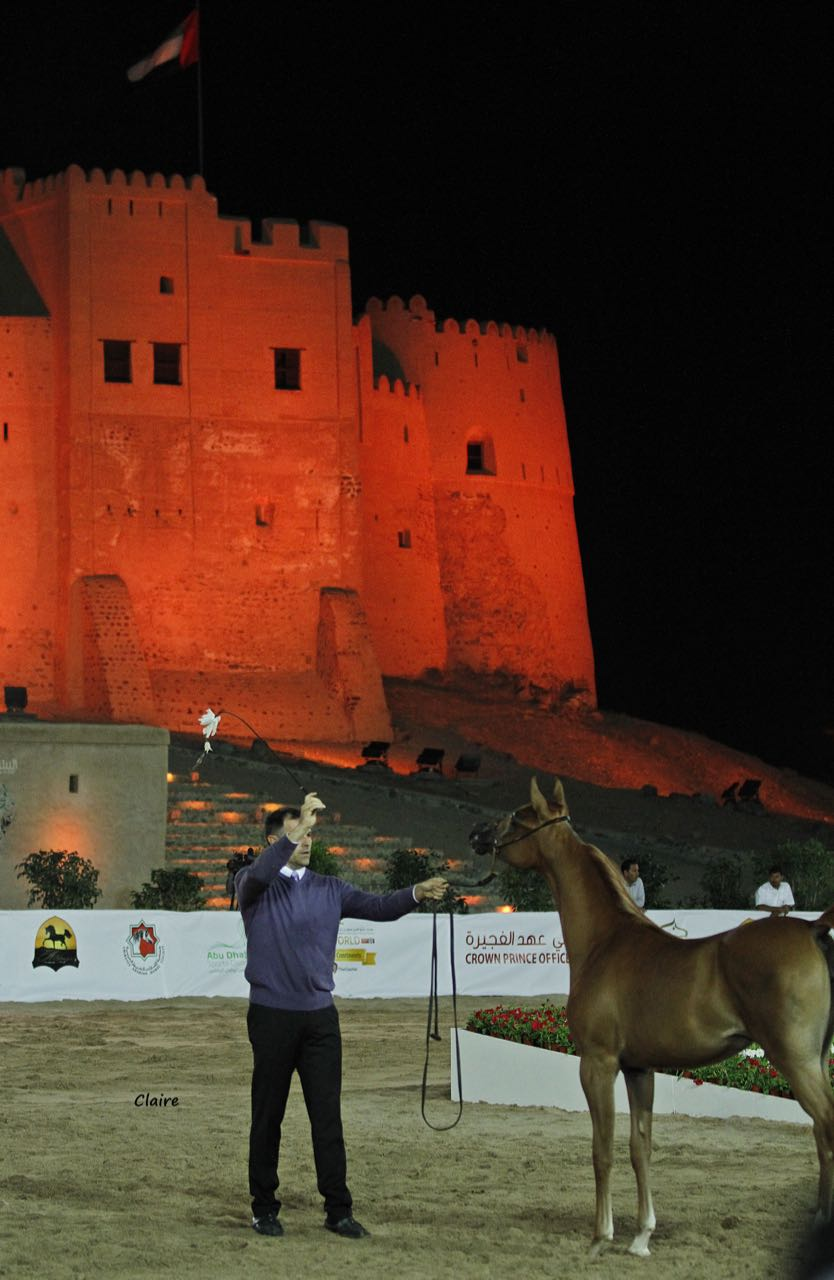 Fujairah National Arabian Horse Show against the backdrop of historical Fujairah Fort