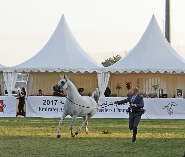 Emirates Arabian Horse Breeders Championship - photo by Claire Reigneaud