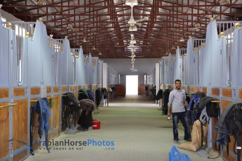 2017 Al-Khashab Arabian Open Day