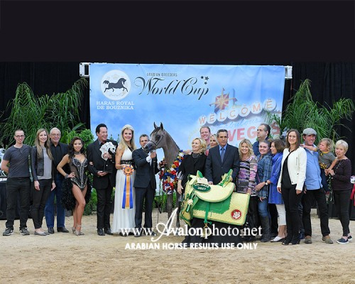 2017 Las Vegas Arabian Breeders World Cup